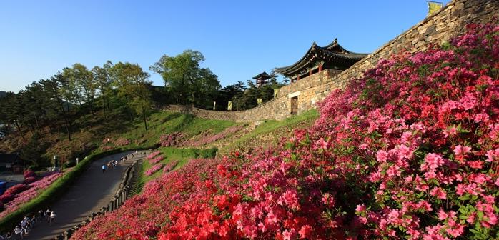 2_gongju-mountain-fortress-flowers.jpg