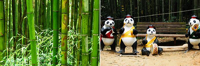 bambusz_2_kep.jpg