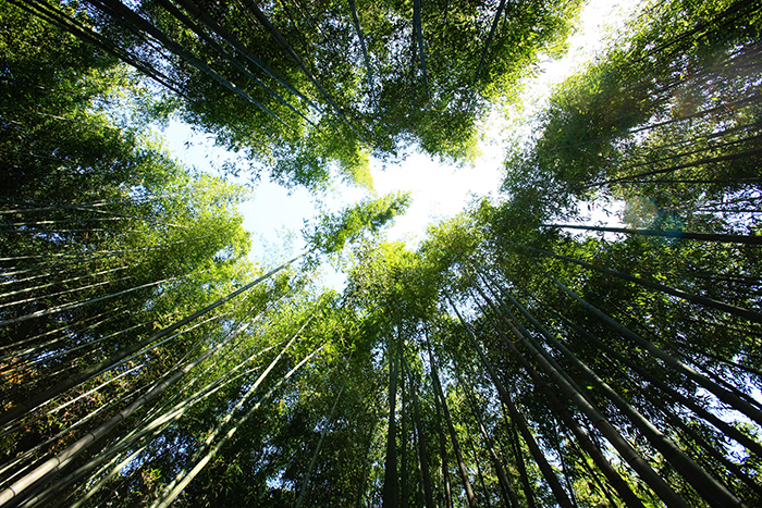 bambusz_3_kep.jpg