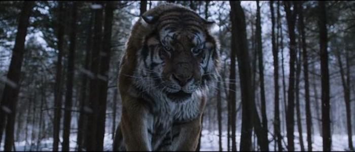 borito_tigris.jpg