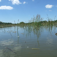 A Körösök merész álma. Avagy  egy júniusi áradás tanulságai.