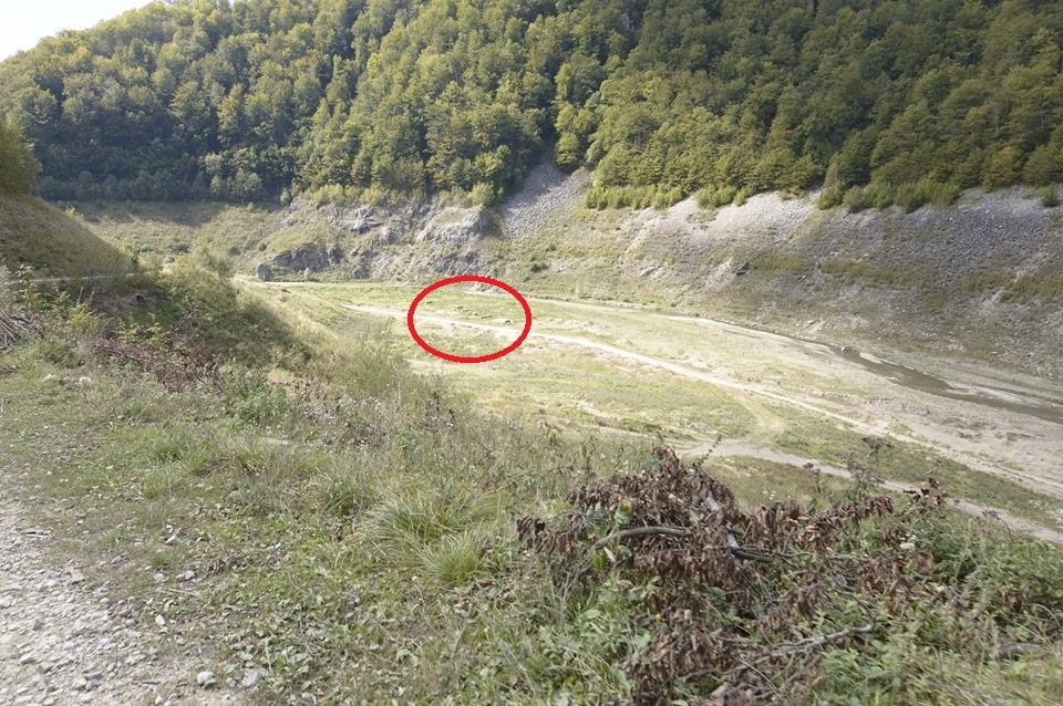 A Jádvölgyi tározó leeresztett állapotban.A méretek szemléltetése miatt a legelésző tehéncsordát bekarikáztam.(fotó : Simon Ferenc)