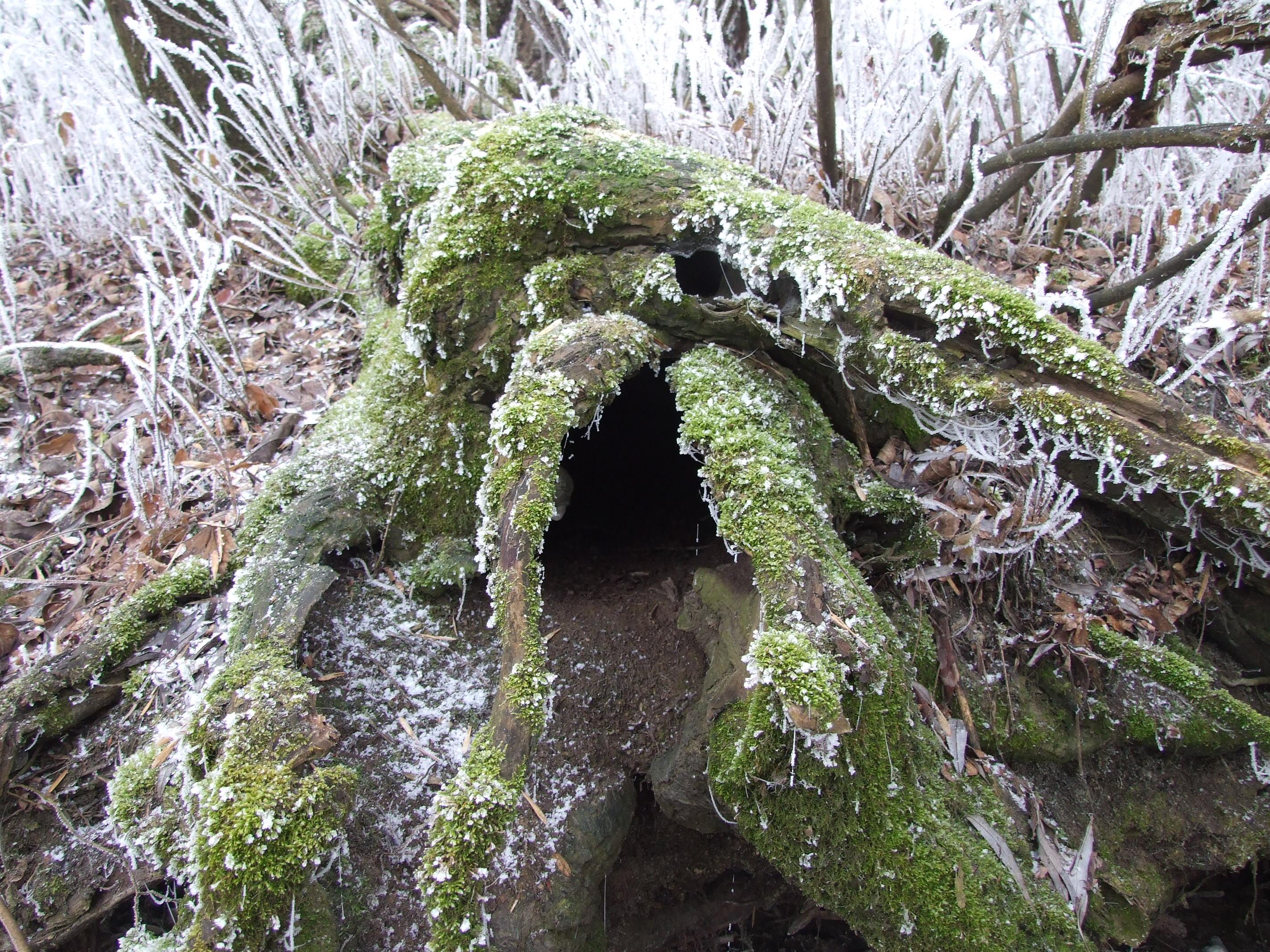 Kiborult fa gyökérzete közt ott van bizony  a vidra odú bejárata