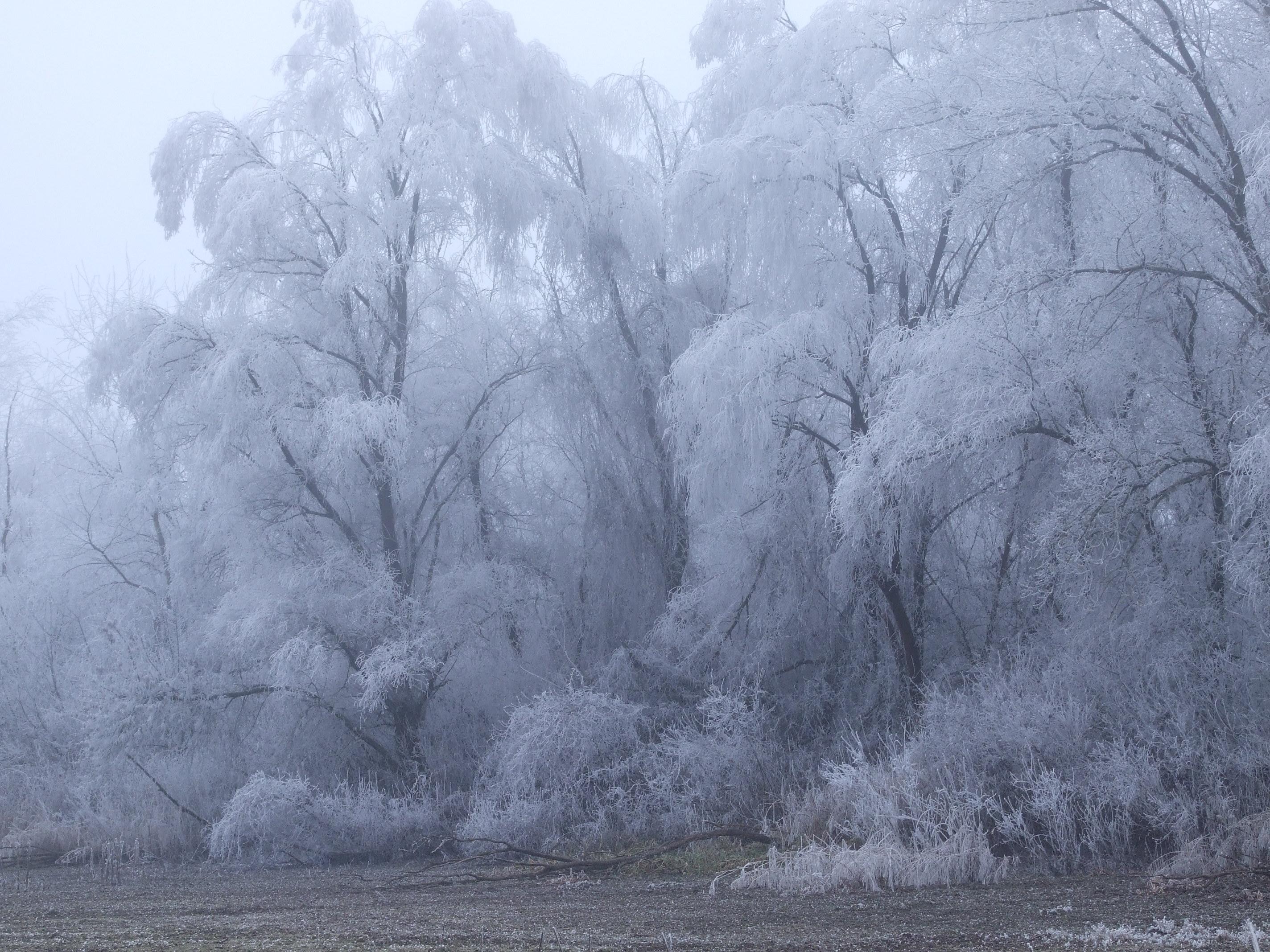 A holtágparti fákon mázsa szám áll a zúzmara .