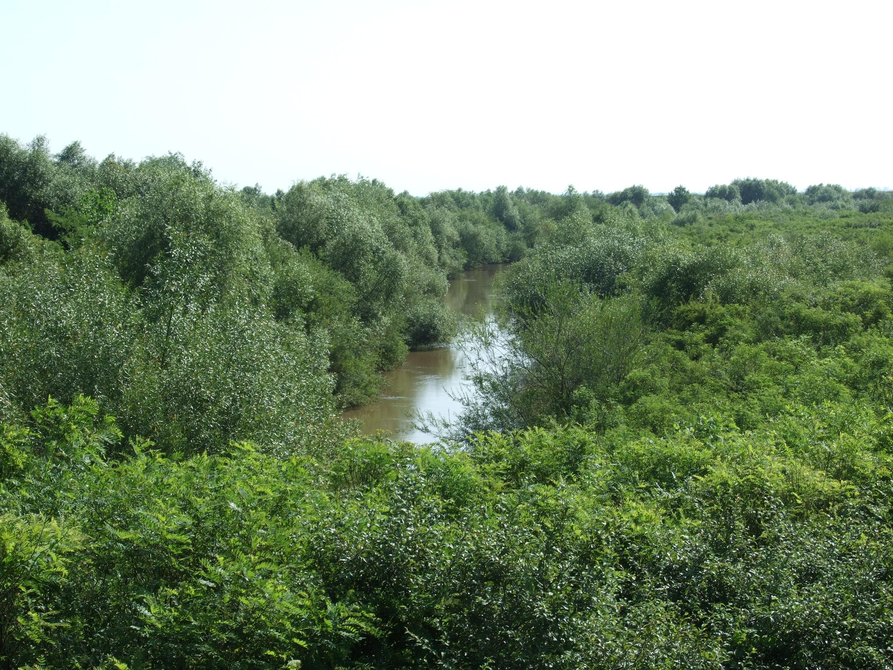 A Fehér Körös jellege teljesen eltér Romániában a nálunk megszokottól. Nálunk 10km hosszú ásott, egyenes medrű folyó . Odaát egy kanyarokkal teli vadregényes víz.  Ami sajnos a buja növényzet miatt nagyon kevés helyen közelíthető meg.