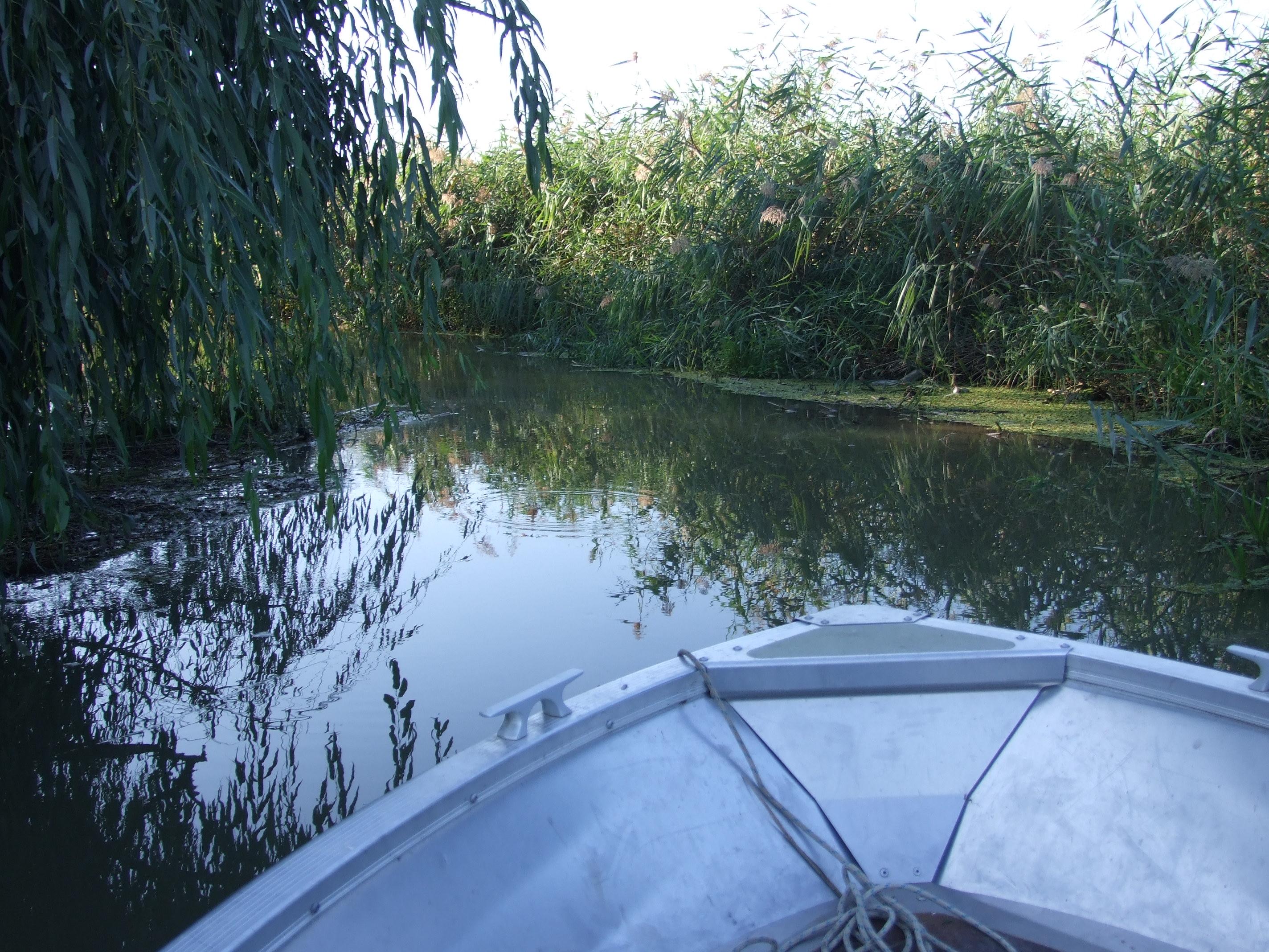 Néhol alig pár méter széles. De vize komoly halakat rejt. fogtak itt már több tízkilós harcsát is.