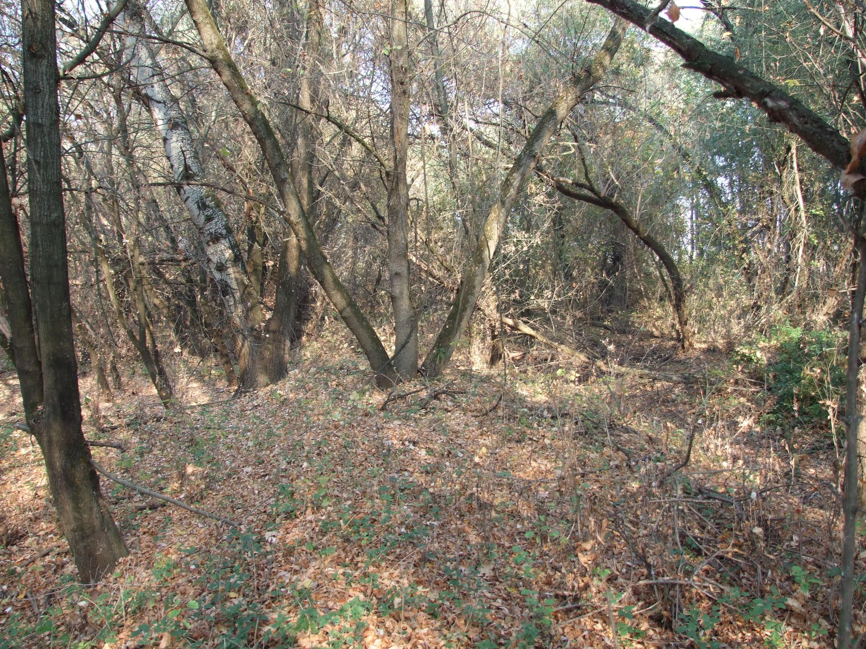 Partjának egy részét kőris erdő övezi
