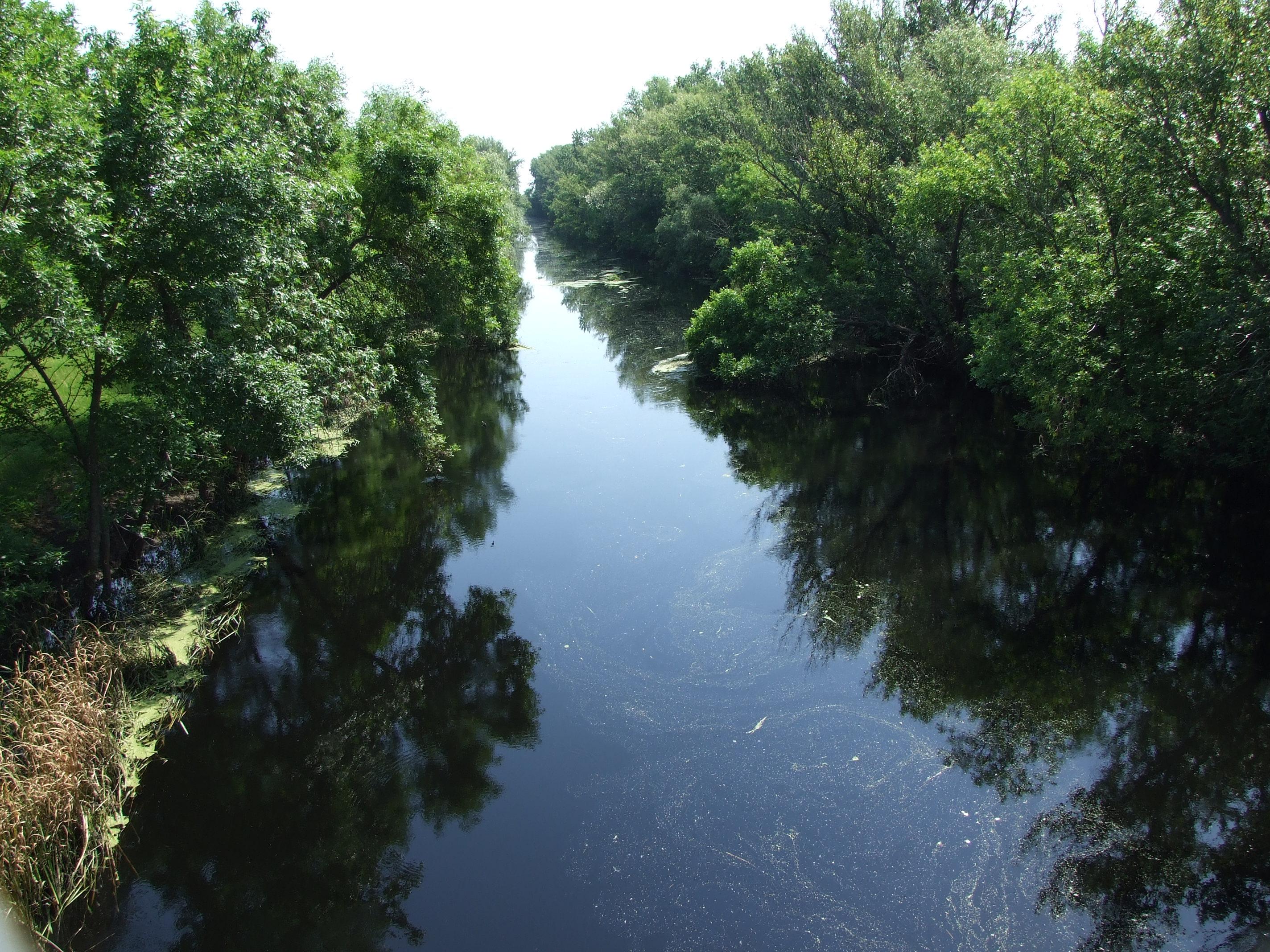 A pangó víz miatt kialakult oxigénhiányos egészségtelen színű víz a Hortobágy-Berettyón.