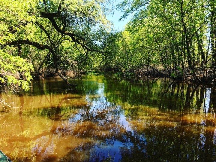 A Torkolat és Mezőtúr közti erdős, ligetes szakasz. (Fotó : Molnár Zsolt)