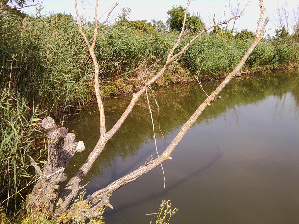 Akadókkal tagolt víz.Fotó: Viczján Pál