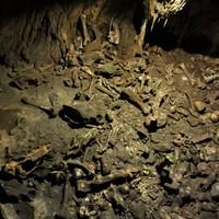 Körösvidék barlangjai 2. – Medve-barlang (Peştera Urşilor)