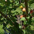 Mi az a gyümölcsészet és miért fontos a kutatása?