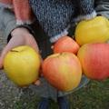 Gyümölcsészet kutatás a gyakorlatban