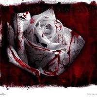 A vér