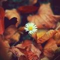 """""""Elhull a virág, eliramlik az élet…""""? Konferencia """"szeptember végén"""""""