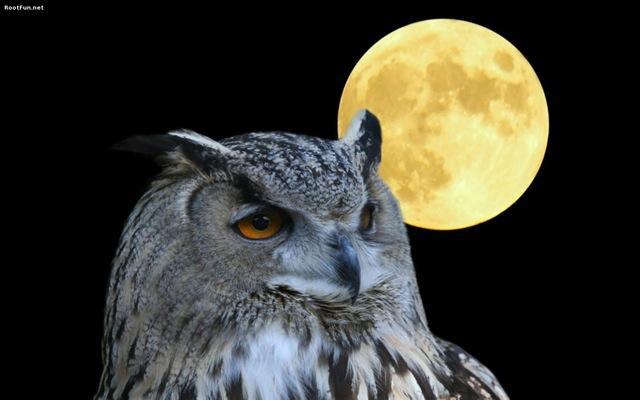 Owl-Moon-Wallpaper.jpg