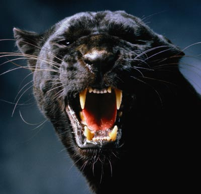 black-panther.jpg