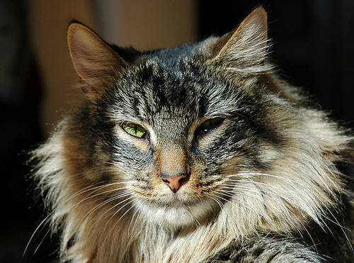 cat-eva101.jpg