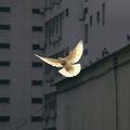 Az igazi belső békéről