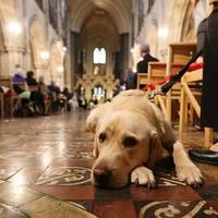 Luther és a kutyusok