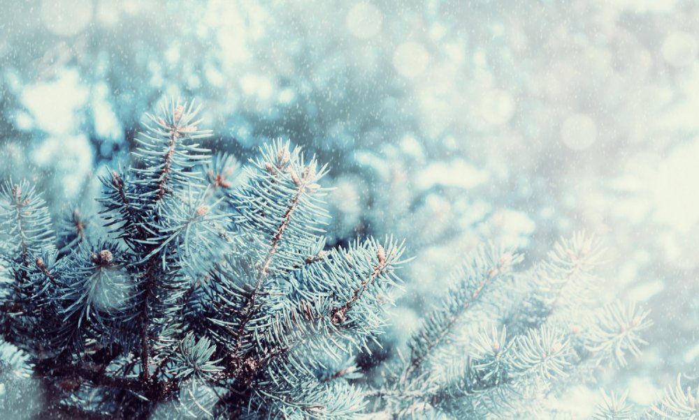 Valódi fehér karácsonyt vágyunk és kívánunk!