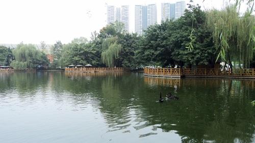 Teaházak a tó partján, fekete hattyúkkal