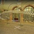 A Google visszahozta közénk a dinoszauruszokat