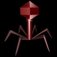 Így terjed a zika vírus