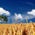 Oktatás, foglalkoztatás és versenyképesség az agráriumban