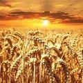 Fókuszban a KAP, a vidékfejlesztés és az agrár-felsőoktatás