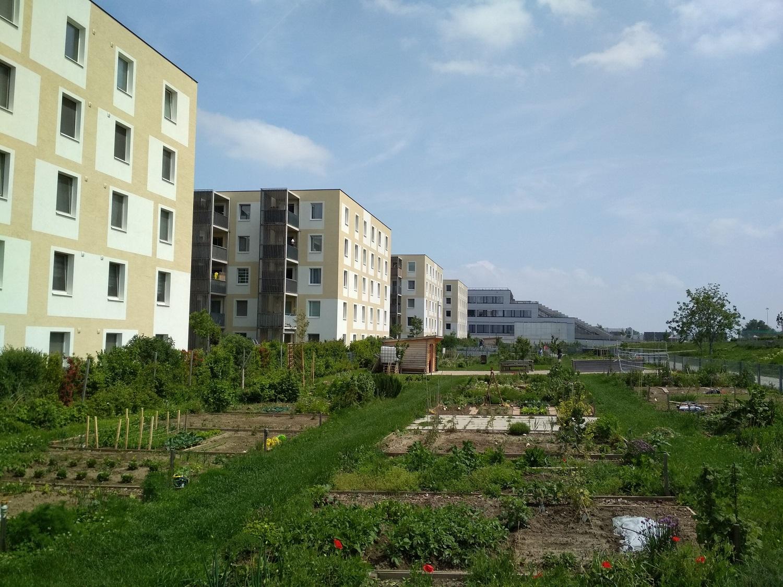A lakótelepen közösségi kertek is vannak, ahol a helyiek művelhetik a saját parcellájukat