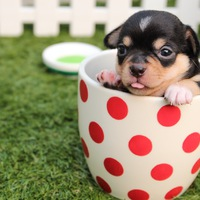 Milyen jó lenne egy kutya az irodába! Vagy inkább kirázza tőle a hideg?