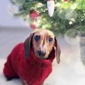 Add át a karácsony hangulatát követőidnek!