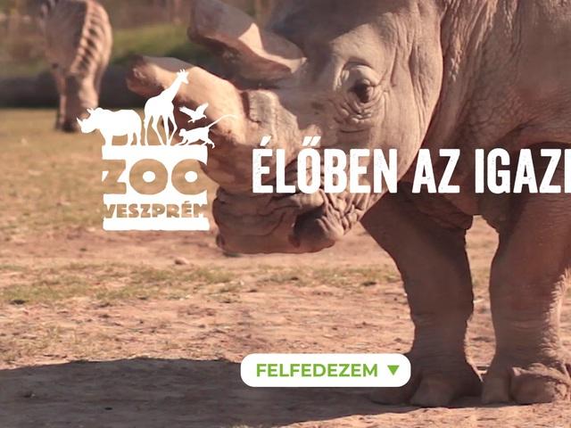 Hogyan NE kezelj konfliktust! - PR-katasztrófa a Veszprémi Állatkertnél