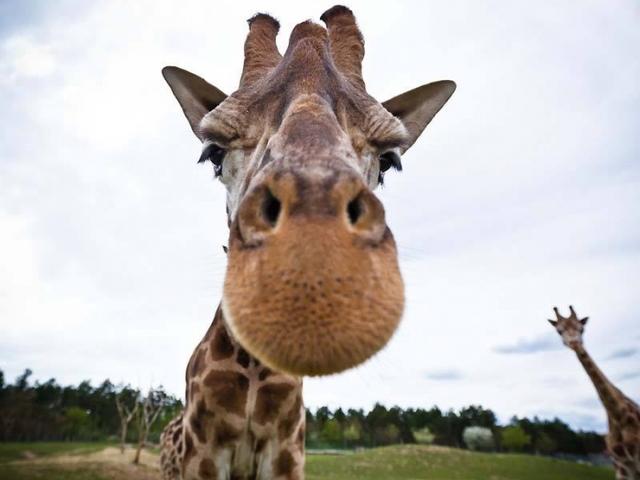 Így használja a közösségi médiát a Veszprémi Állatkert... - miniaudit