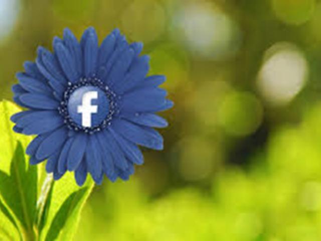 Tavaszi nagytakarítás a Facebook-on