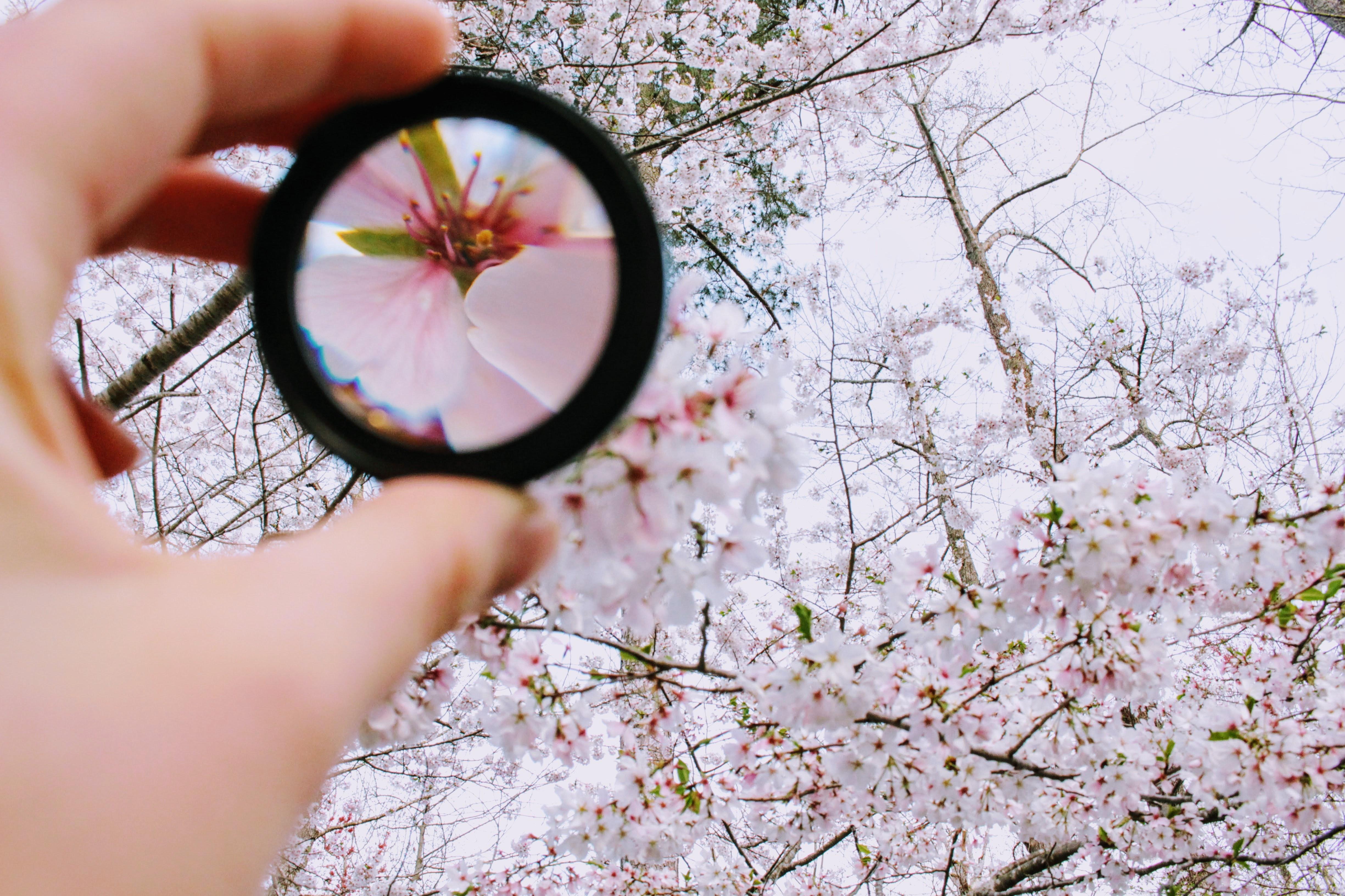 bloom-blooming-blossom-979927.jpg