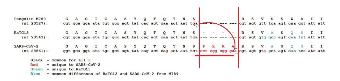 sarscov2_insertionoutofframe.jpg