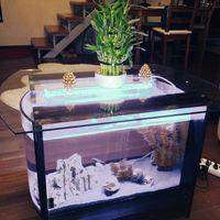 70 literes, fenyő ovális akvárium dohányzóasztal