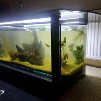 220 literes akvárium-dohányzóasztal