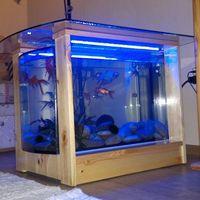 Borovi fenyő 70 literes íves akvárium dohányzóasztal