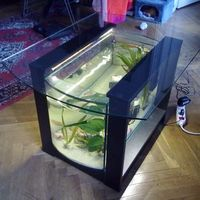 70 literes íves akvárium-dohányzóasztal