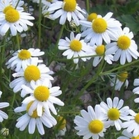 A fűszernövények helyett jövőre gyögynövény kertem lesz. Brrrrr, aaaahhhh és hapci.