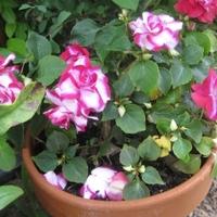 Virágnap kertdoktoréknál