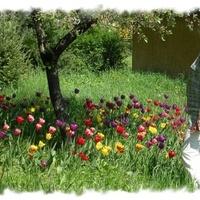 Kedvenc vidéki kertem