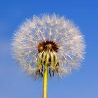 pollen_allergie_0.jpg