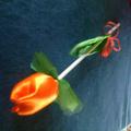 Selyem tulipán