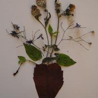 Szárazvirág kép