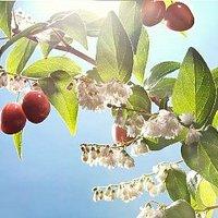 Ismerd meg a cseresznyét!
