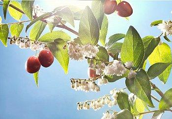 cseresznye.jpg